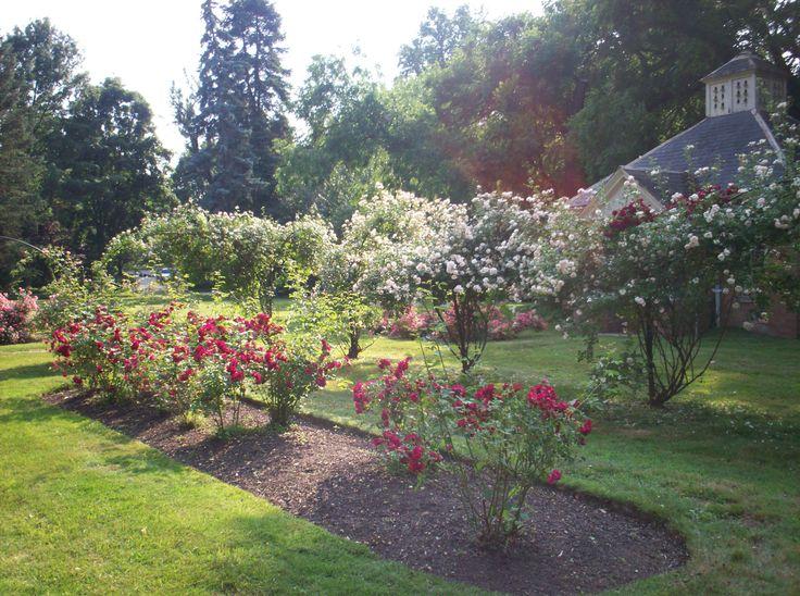 glen foerd rose garden